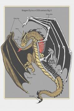 Estampa Camiseta Dragon Anatomy
