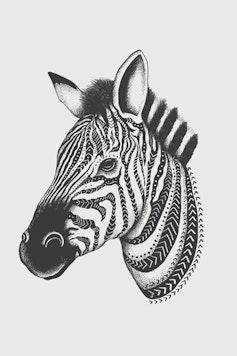 Estampa Camiseta Zebra