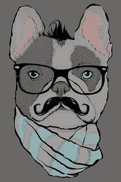 Estampa Camiseta French Bulldog