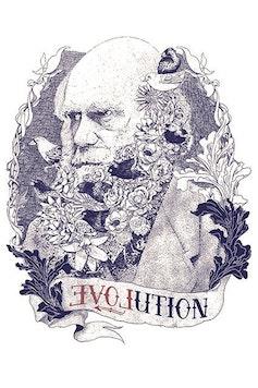 Estampa Camiseta Evolution
