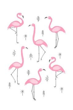 Estampa Camiseta Flamingos
