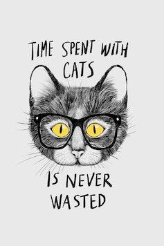 Estampa Camiseta Cats