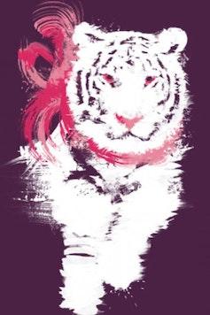 Estampa Camiseta My Little Tiger