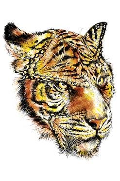 Camiseta Tiger Hidden R$74,90   4x de R$18,73