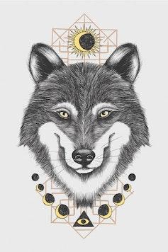 Estampa Capa Canis Lupus