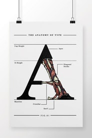 Poster The Anatomy of Type